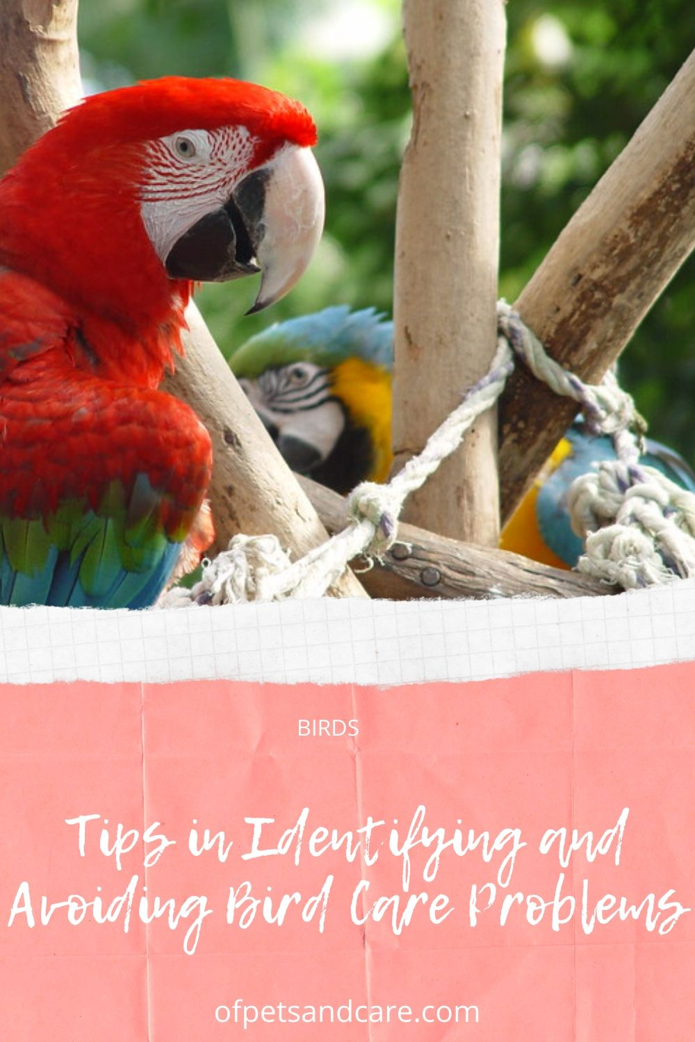 Tips in Identifying and Avoiding Bird Care Problems