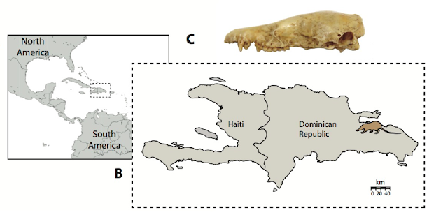 Ancient DNA traces extinct Caribbean 'Island Murderer' back to the dawn of mammals