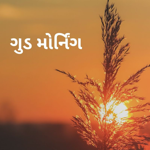 good morning gujarati messages, good morning sad shayari with images, good morning image with shayari hd, good morning images in hindi hd, good morning gujarati suvichar, good morning love shayari image, good morning images hindi new