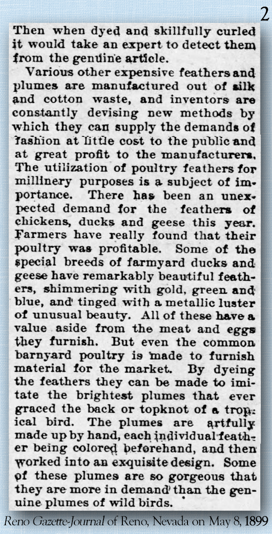 Kristin Holt | Madam, is that a duck on your hat? Feathered Finery: Plumage for Millinery Now Artificially Produced. The humble Barnyard Fowl Now Furnishs The Material for a Great Deal of the New Hat Trimming. Part 2 of 3.