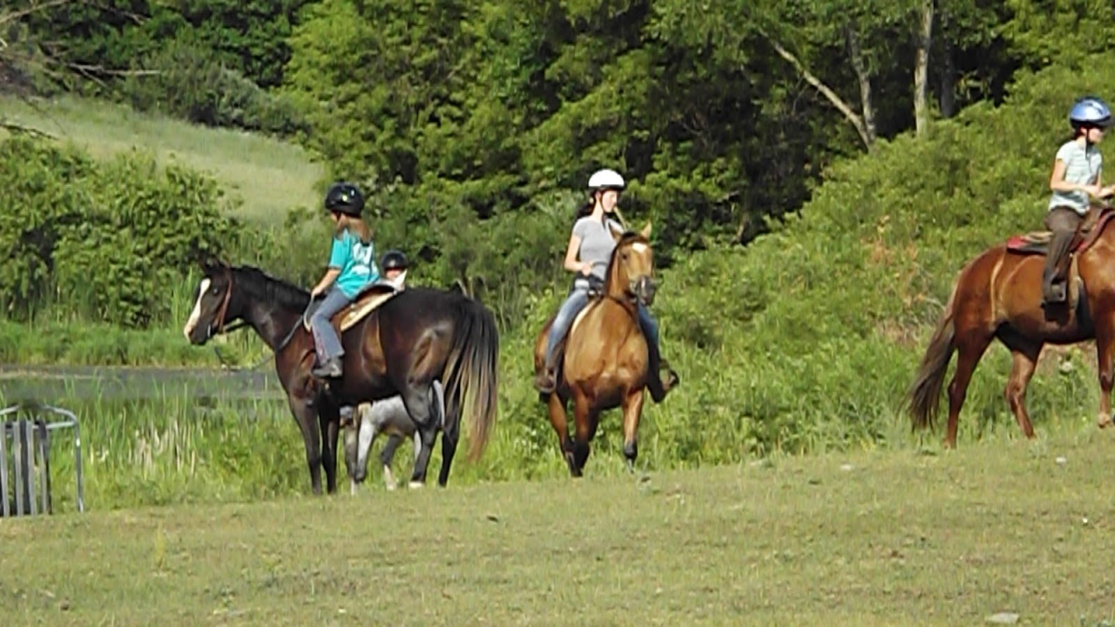 Horseback Riding In Hillsdale Mi