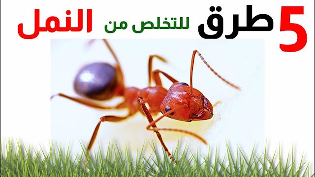 أسباب تواجد النمل في البيت