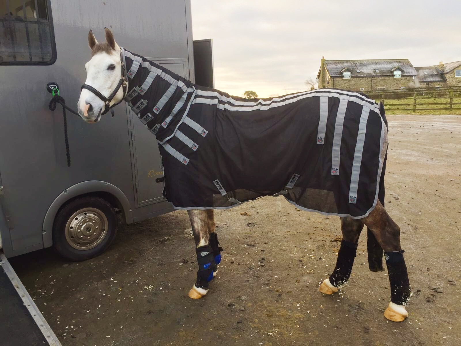 Louie Ready To Go Home In His Premier Equine Magnetic Rug