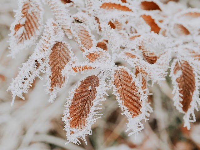 FROST: What is Frost | How Frost is Formed | Types of Frost | Which Areas are Frost Free | Effects of Frost |