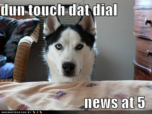 News At 5 Funny Dogs