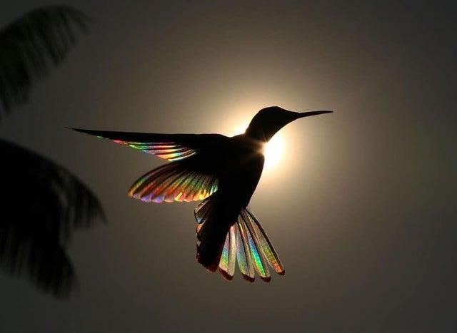 This perfectly timed picture of a bird in front of the sun shows the colours of its wings.