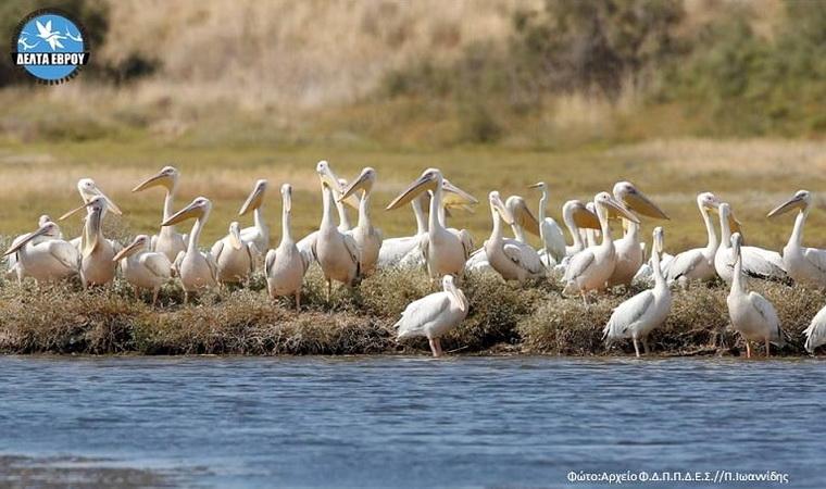 Η εντυπωσιακή μετανάστευση των πουλιών στο Δέλτα Έβρου