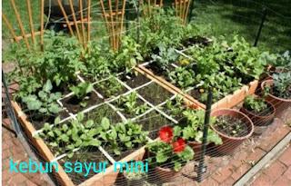 Kebun sayur mini