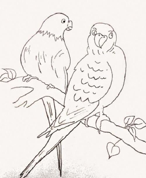 Pencil Sketch of Parrot