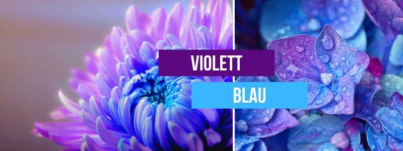 violett-blau-kombinieren