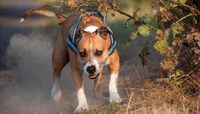 Собака 12 часов просидела на холоде, привязанная к дереву. Если бы она только знала, что хозяина увезла «скорая»