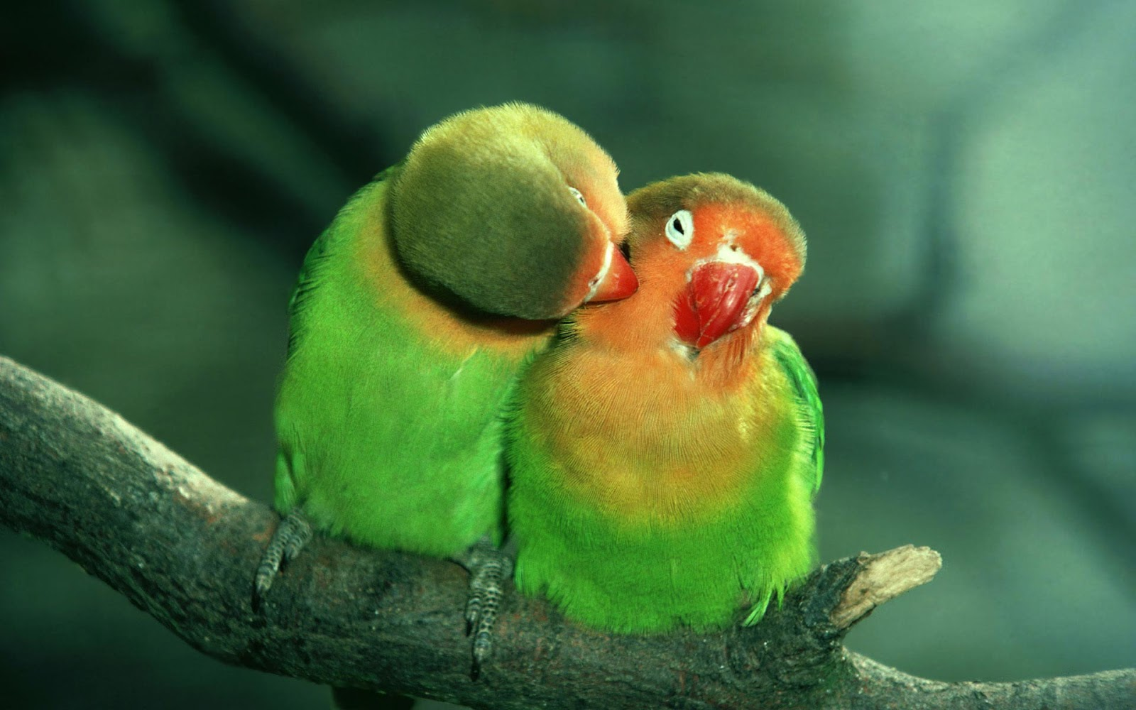 """Wallpapers Love Birds: Vocabulary And Idioms: """"Bird Idioms"""" From Voice Of America"""