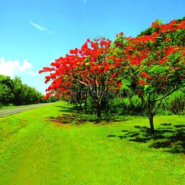 Nature: Beauty Of Nature: Bangladesh