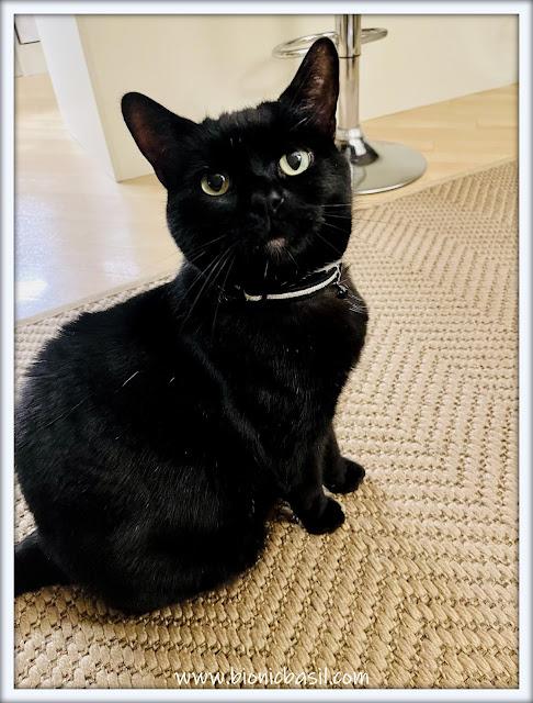 Panfur Parsley's Epic Selfie black cat housepanthernday Selfies