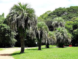 Butiazeiros - Jardim Botânico de Porto Alegre