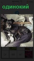 На грязном белье свернувшись в клубок сидит одинокая собака с грустным видом