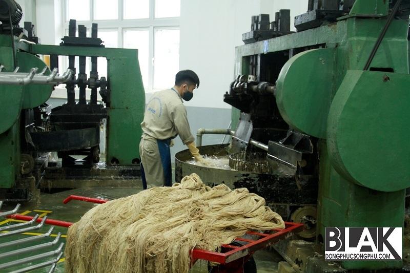 Sau đó được đem ra tẩy rửa liên hợp để có được sợi gai tinh khô