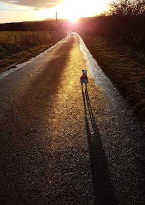 Bracken walking into the sunset