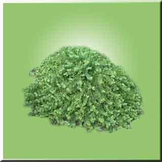 bitki bitkler Kebere otu faydaları Kebereotu zararları Kebereotu bitkisi