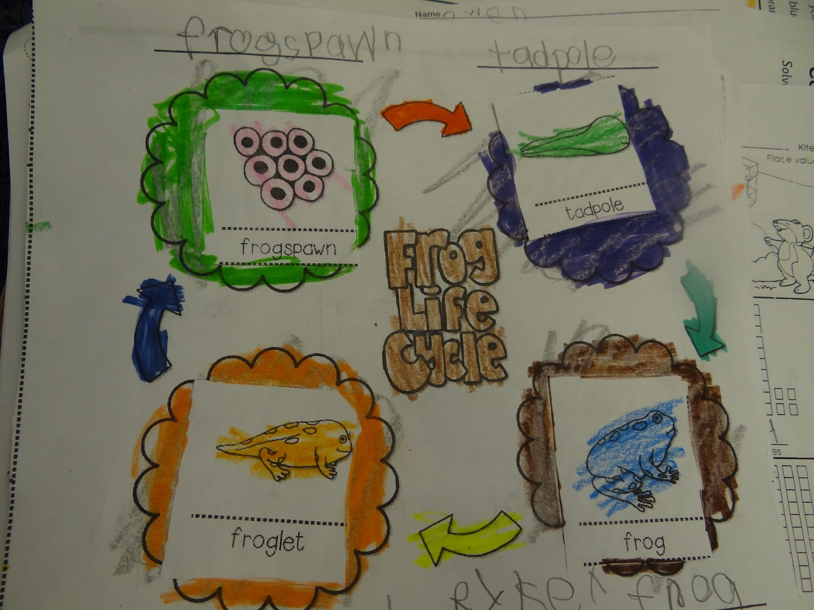 Patties Classroom Frog Life Cycles In Kindergarten