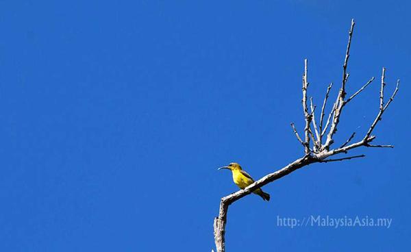 Mantanani Island Bird Watching