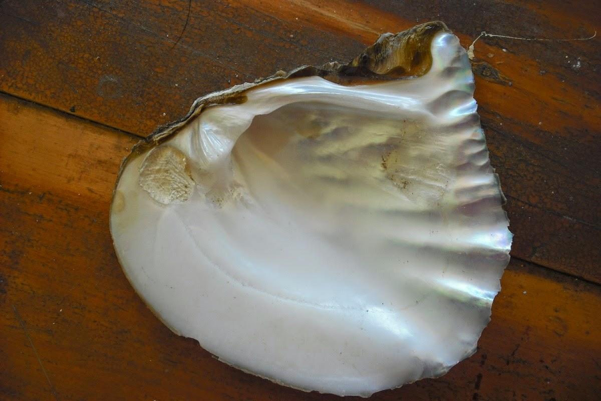 Belleza Natural: Beneficios de la Crema de concha nacar