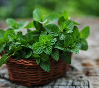mint leaves helps you to protect from gastric trouble