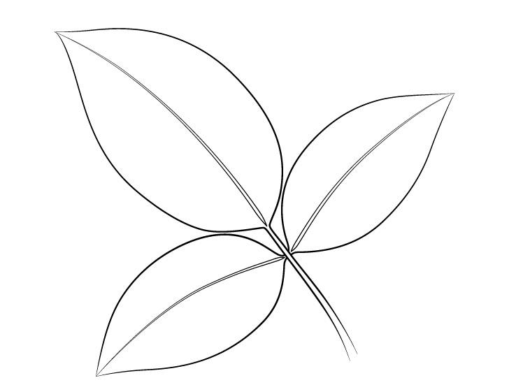 Gambar daun mawar daun