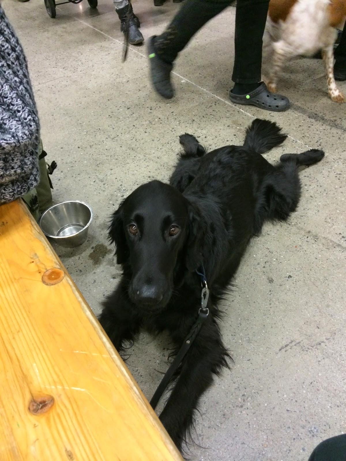 Ny bok avslojar 15 kandisars hundliv