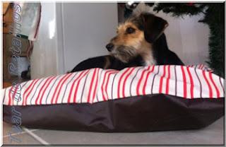 A cachorrinha MEL usufruindo seu colchão confortável e macio.