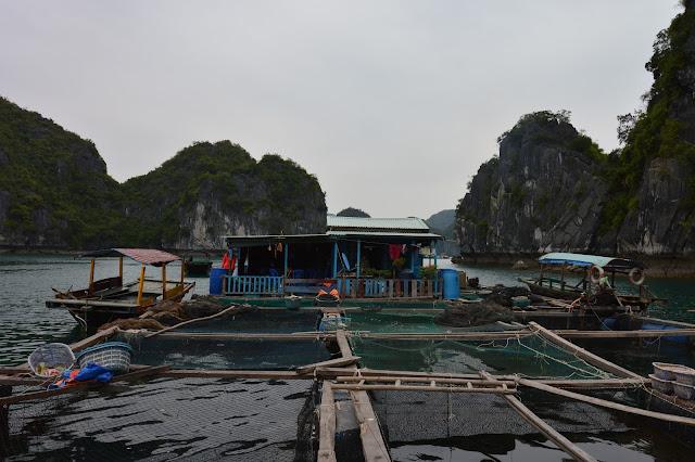 Maison de pêcheur dans la baie d'Halong maritime