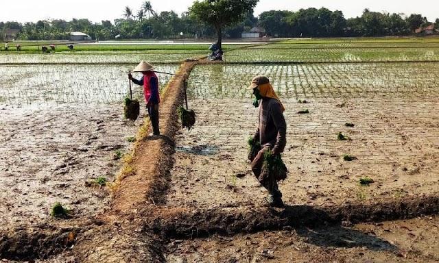 Petani Karawang Sampaikan Keluh Resah Soal Pupuk Kepada Anggota DPRD Jabar