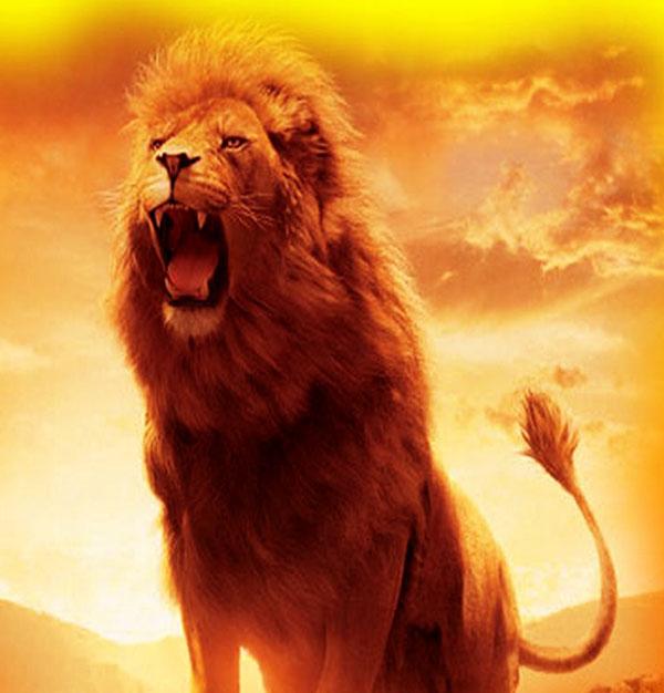 sher lion ka photo HD FOR WHATSAPP