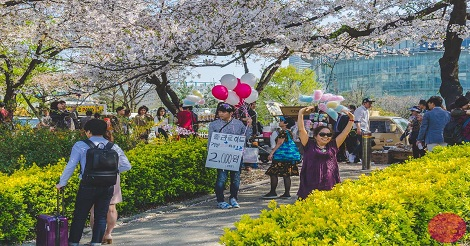 Yeouido Park, Seoul - April