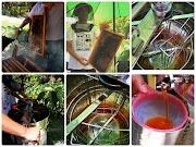 愛蜂園 體驗半日蜂農的生活