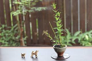 信楽焼の小さな鉢に入ったオトギリソウの山野草盆栽と親子の犬の置物