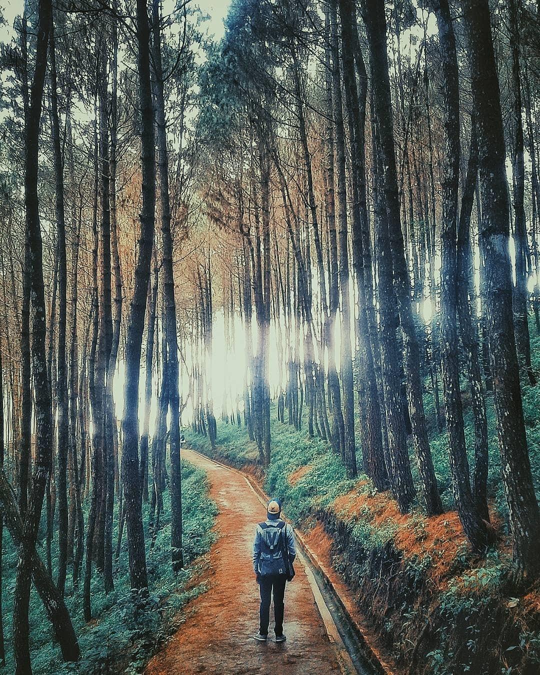 Menyusuri Hutan Pinus Puncak Bintang Bukit Moko Bandung