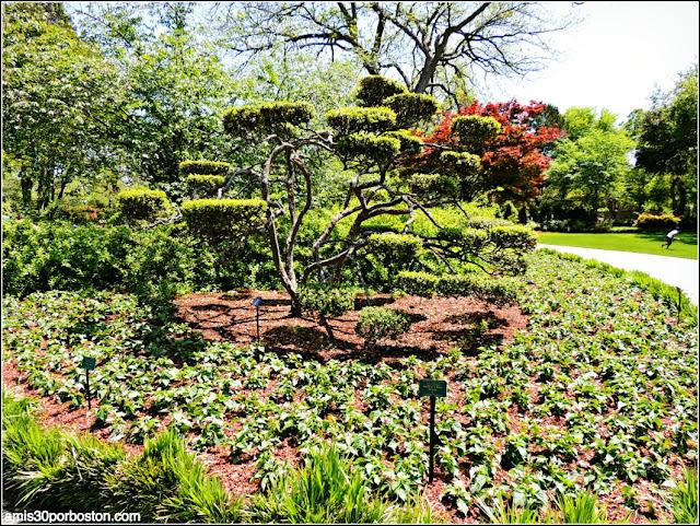 Dallas Arboretum & Botanical Garden: Paseo de Flores
