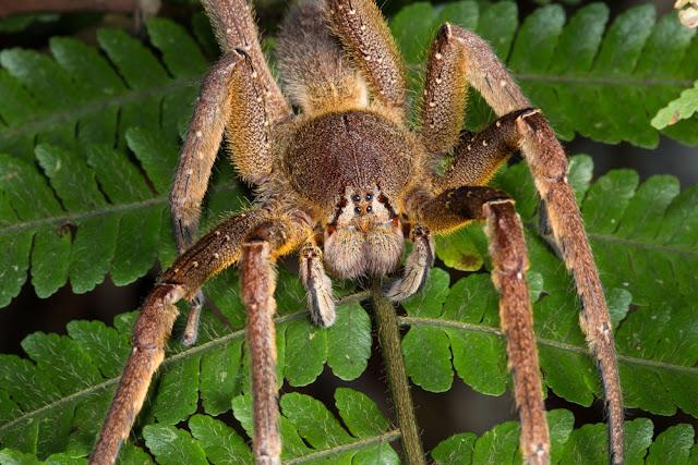 العنكبوت-اخطر-حيوان-في-العالم