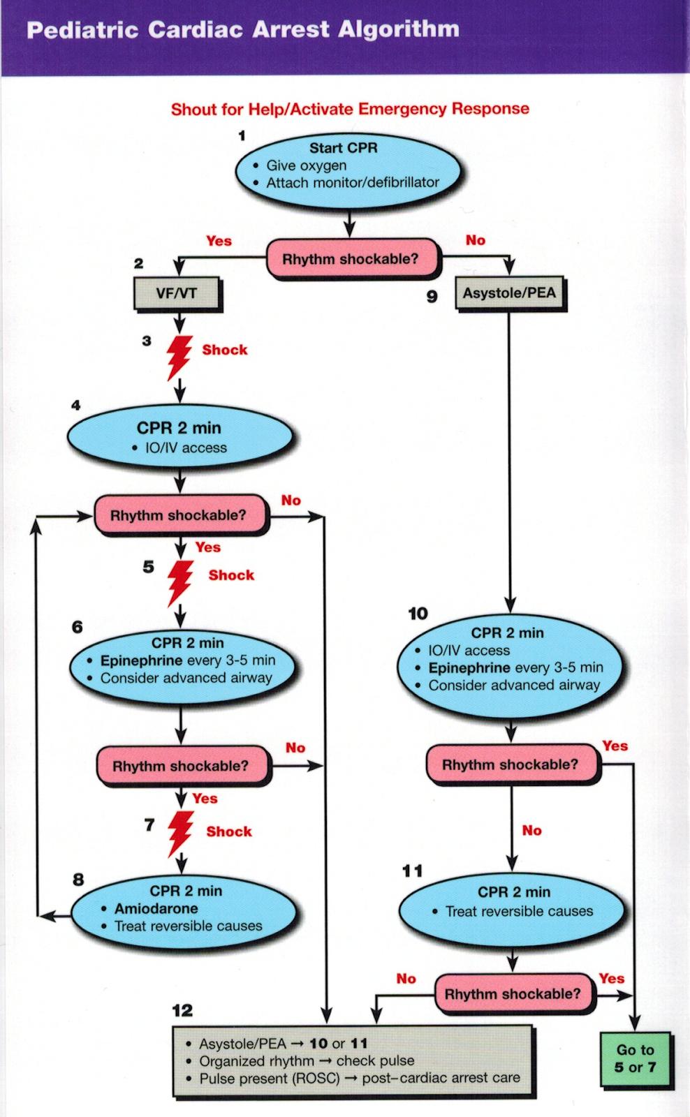 anmc guidelines for enrolled nurses