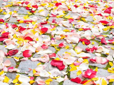 Pétalos de flores sobre el suelo