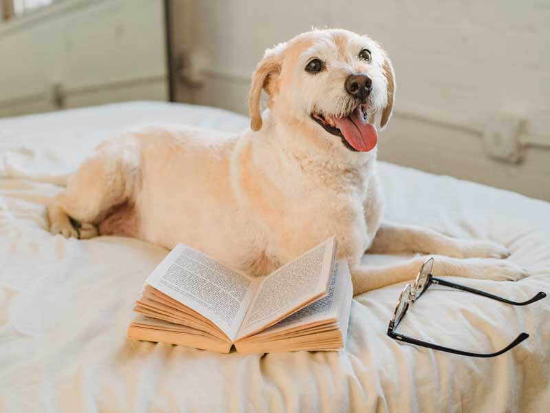 Homemade Puppy Food Recipes Vet Approved