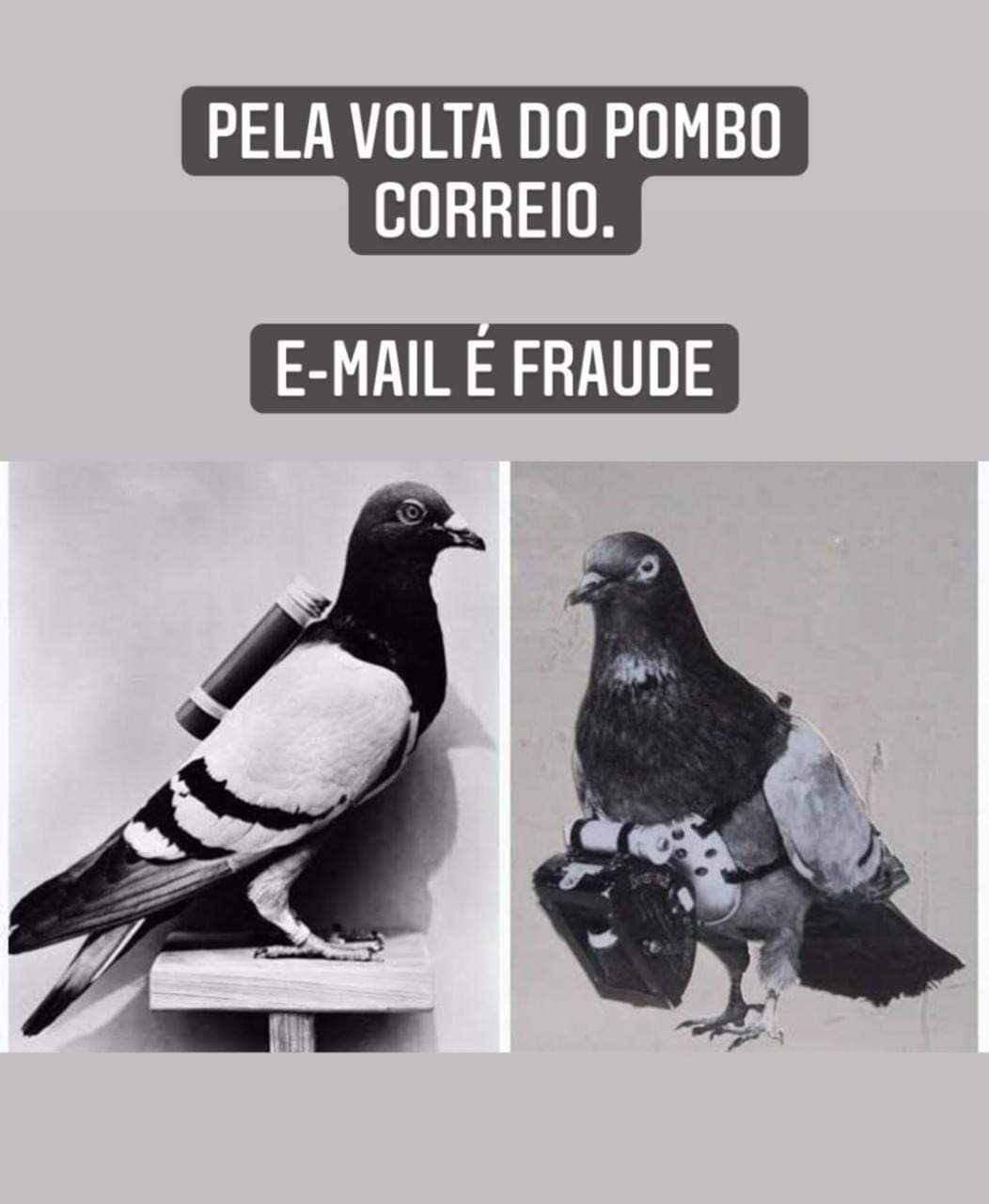 email e fraude volta pombo correio
