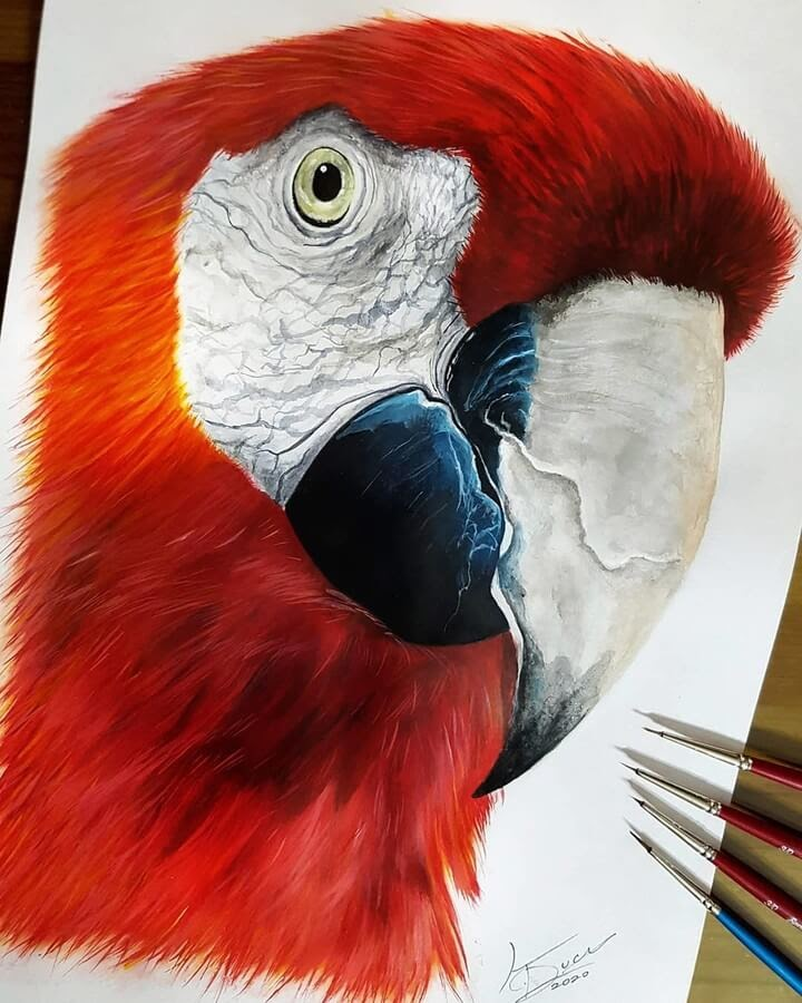 06-Scarlet-Macaw-Kyle-Duca-Animal-Paintings-www-designstack-co