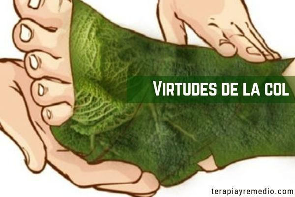 La Col aplicada como cataplasma para desinflamar o simplemente las hojas