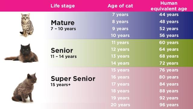 Umur kucing berbanding manusia