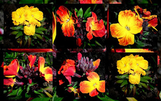 yellow and red flower photo collage