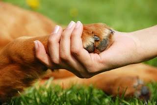 Reflexión sobre perros callejeros: ¡PERDÓNAME!