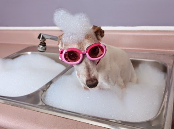 Funny sad dog in the sink with pink goggles