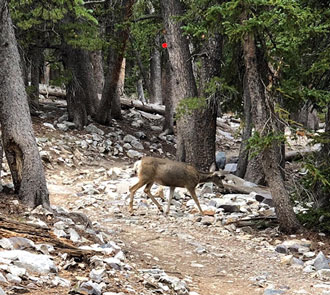 Deer on the trail up the mountain at GBNP (Source: Palmia Observatory)